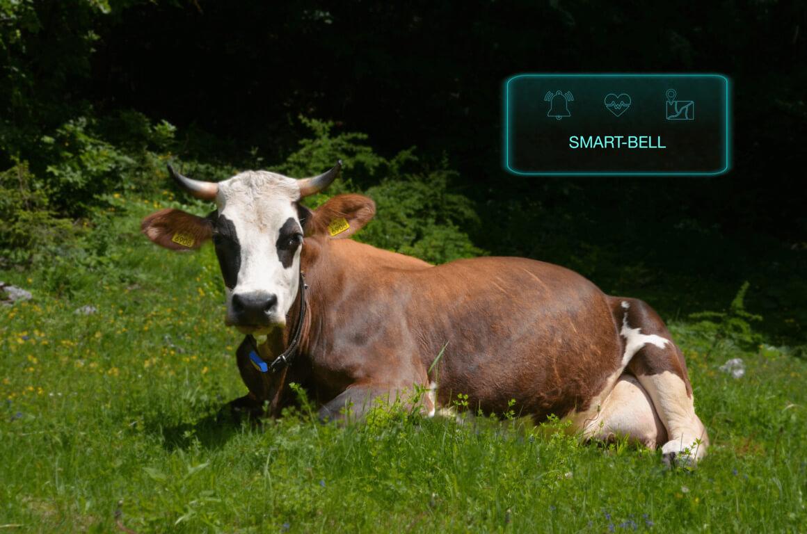 Smart-bell